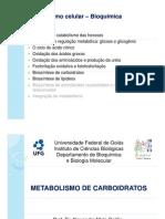 aula.metabolismocarboidratos