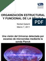 Clase 1 Organizacion Estructural y Funcional de La Celula