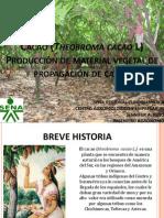 1. Cacao (Theobroma Cacao L)