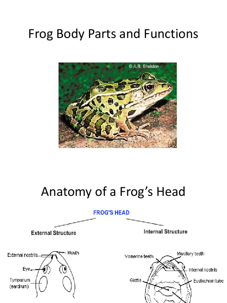 Frog Body Parts and Functions | Reproductive System | Heart