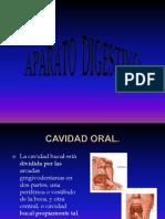 AP Digestivo Micro