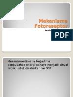 Mekanisme Fotoreseptor