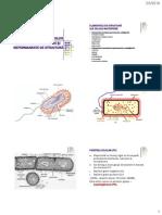 Ultrastr_bacteriilor
