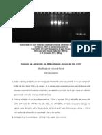 Extraccion de ADN c Cloruro de Litio Modificado