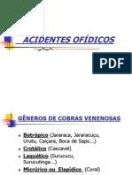 Acidente Ofidicos