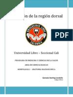 Disección Región Dorsal Derecha