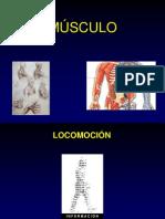 musculo presentacion
