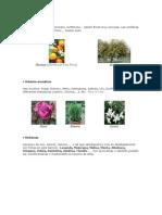 Árboles aromáticos