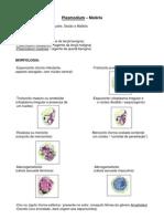 Parasitologia - Plasmodium (Malária)
