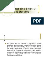 Anatomia de La Piel y Sus Anexos