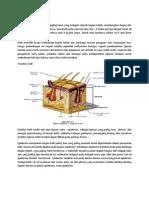 Anatomi Dan Histology Kulit