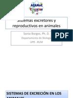 Sistemas Excretores y Reproductivos en Animales