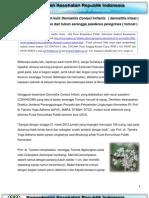 Serangga Tomcat Indonesia - Paederus