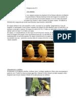 Composición nº 6, los canarios.