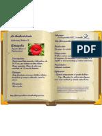 amapola-colección-nº7- herboristería