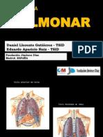 25 Anatomia Pulmonar
