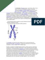 Cromosomas guias orginales
