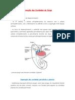 Resumo Formação das Cavidades do Corpo