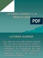 La Rabia Humana y La Bruce Los Is