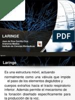 Laringe Presentacion