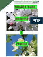 Fertilização da Macieira e Pereira