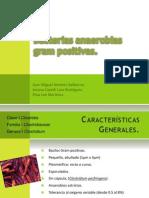 Bacterias Anaerobias Gram Positivas Clostridium