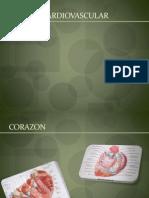 Expo Sic Ion Sistema Cardiovascular