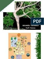 resumao_botanica