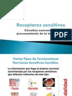 presentacindeclasedelosreceptoressensitivo11