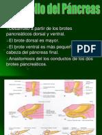 digestivo eli