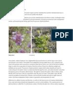 Desert Plant Adaptation