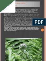 Ciri Ciri Tumbuhan Paku ( Pterydophyta