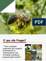 Entomologia Agricola aula 1