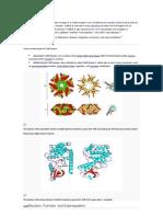 Revisão proteina CaMKII