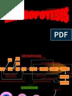 hemoglobina-110727193048-phpapp01