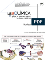 05 Nucleotídeos e Ácidos Nucléicos PDF