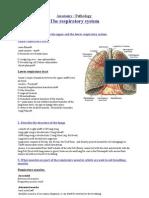 Anatomy-respiratory-system