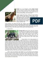 460 Gambar Hewan Yang Hidup Di Darat Beserta Ciri-cirinya HD Terbaik