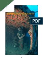 Shipwrecks of the Maldives