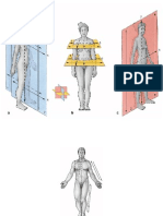 34238946-anatomia-humana-figuras