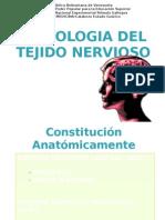 histologiatejidonervioso-100222235234-phpapp01