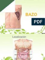 BAZO anatomia