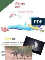 Cat Presentation