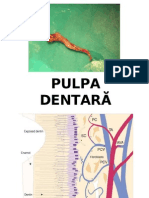 Pulpa dentara