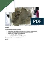Practical Pathology 2