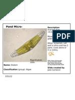 pondlife lab