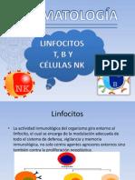 Linfocitosfinal