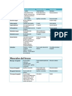Musculos Inserciones y Inervacin Miembro Superior
