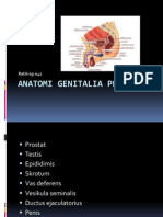 Anatomi Genitalia Pria
