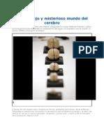 El Complejo y Misterioso Mundo Del Cerebro 2012